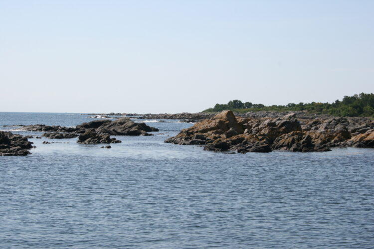 Undervandsjagt Snorkling Bornholm Baltic Sea guide